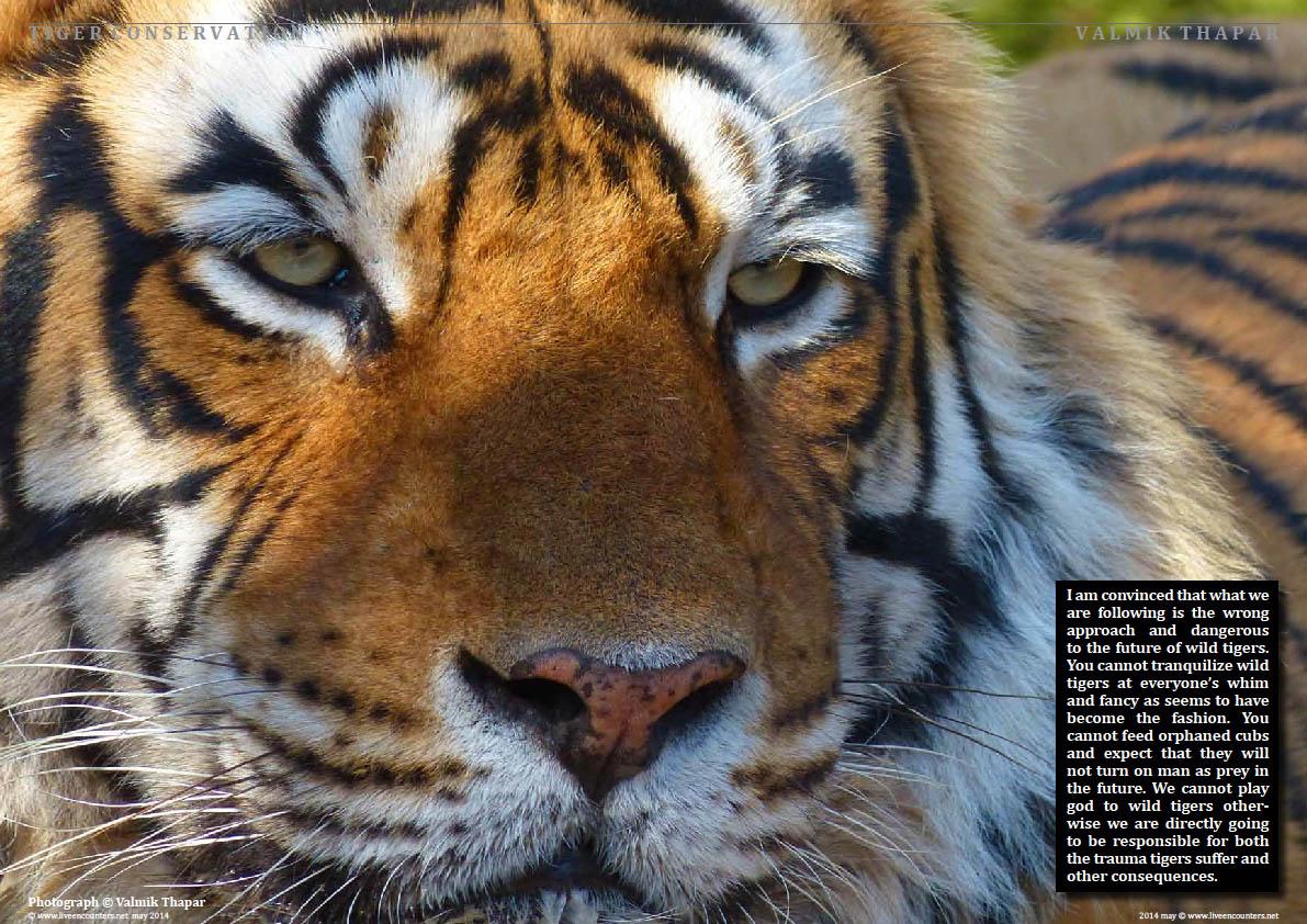 Valmik Thapar Guardian of the Tiger - Page 06