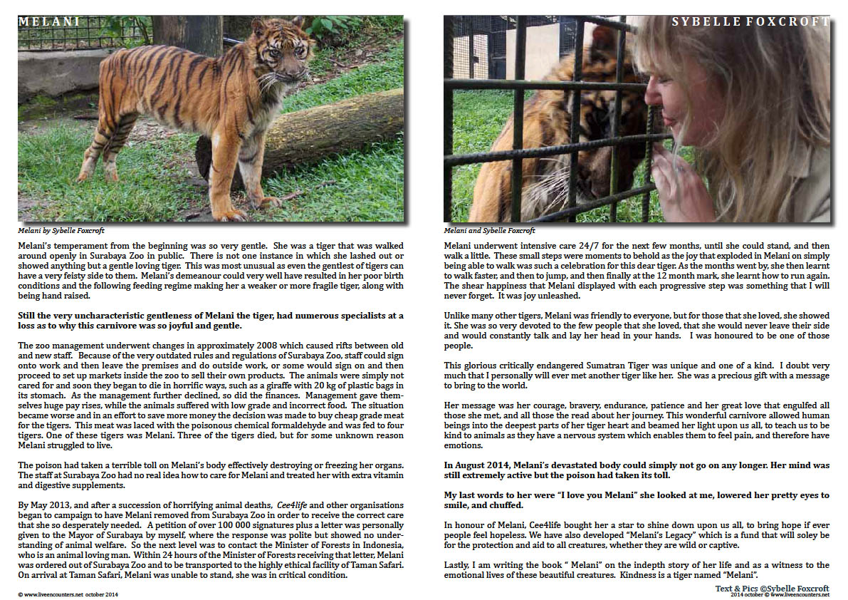 Page 02 Melani - Remembering a beautiful gentle soul by Sybelle Foxcroft Live Encounters Magazine