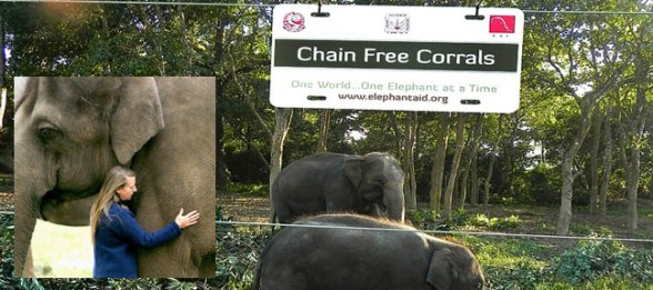Carol Buckley Chains Free Campaign for Elephants Live Encounters Magazine Volume Two 2014