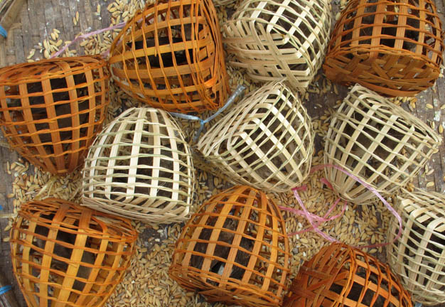 Birds in small bamboo cages sold outside a Buddhist Temple for worshippers to purchase and release . Photograph Mark Ulyseas