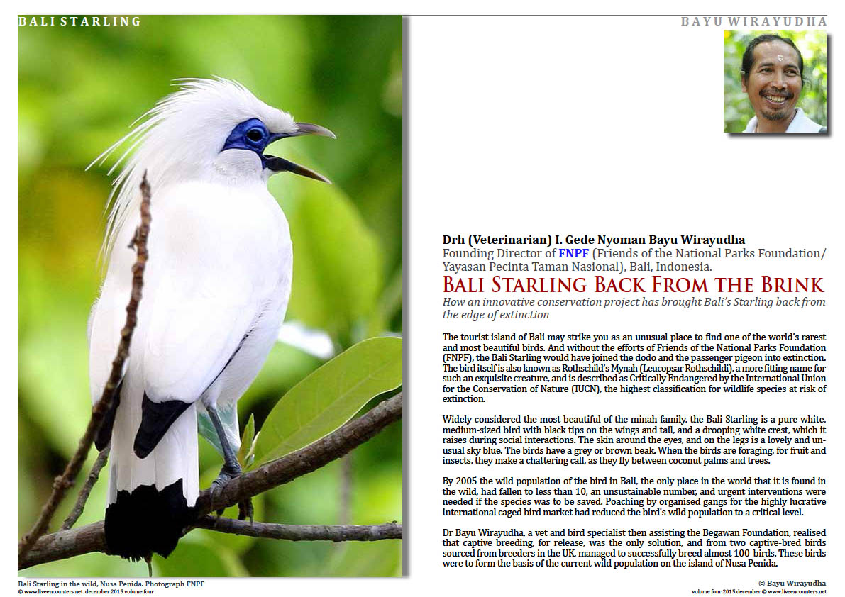 Live Encounters Magazine Dr Bayu Wirayudha – Bali Starling Back from the Brink Page Volume 4 December 2015 Page 01
