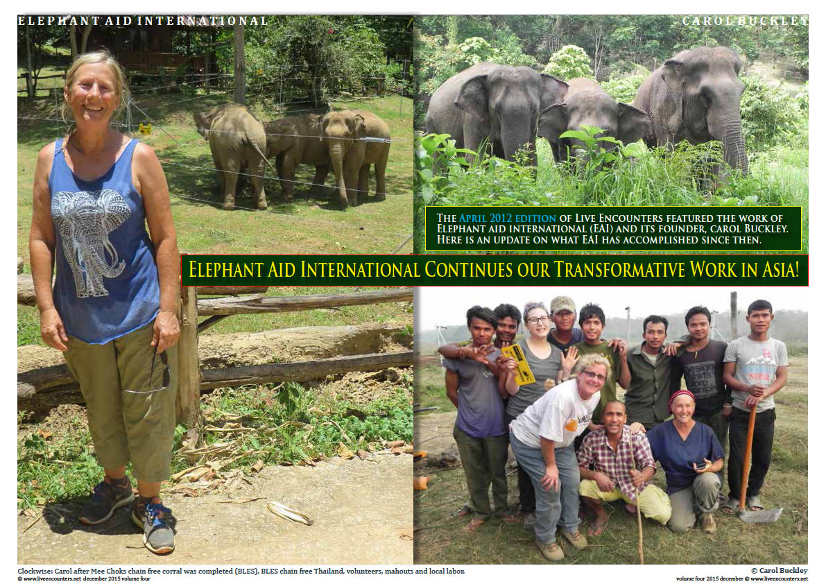 Live Encounters Magazine Carol Buckley Elephant Aid International Continues our Transformative Work in Asia Volume Four December 2015 Page 01