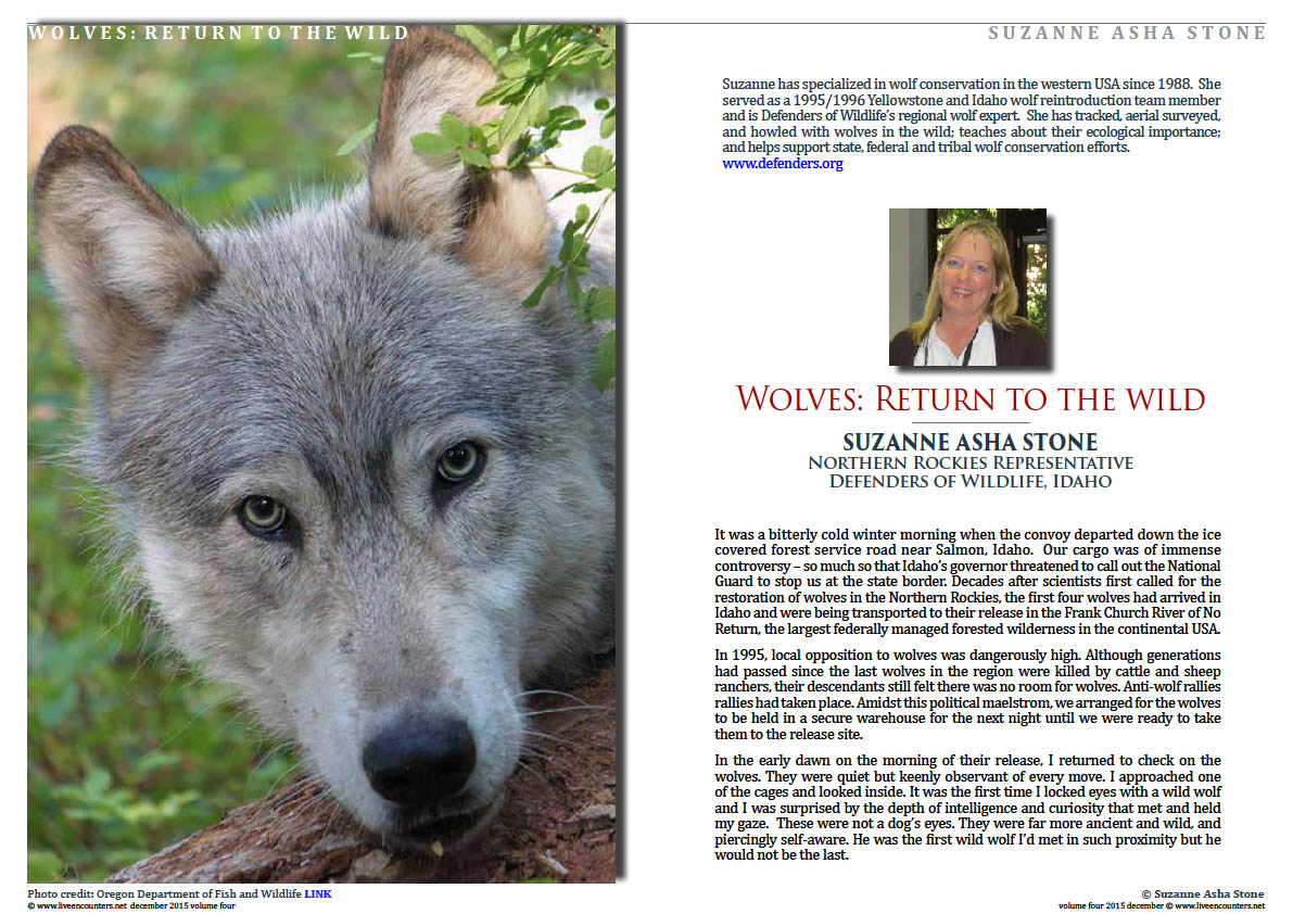 Live Encounters Suzanne Asha Stone Wolves return to the Wild Volume Four December 2015 Page 01
