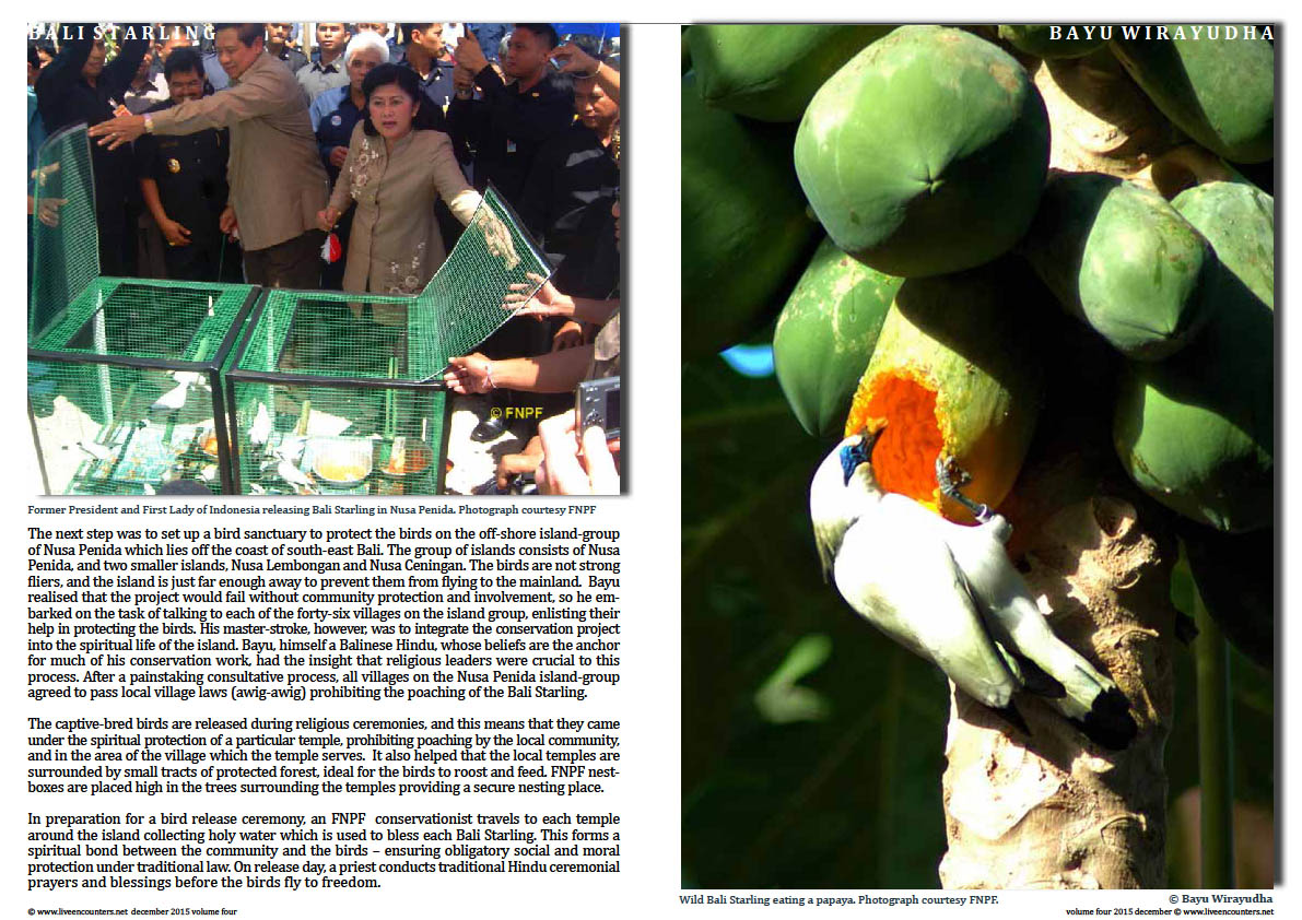 Live Encounters Magazine Dr Bayu Wirayudha – Bali Starling Back from the Brink Page Volume 4 December 2015  Page 02