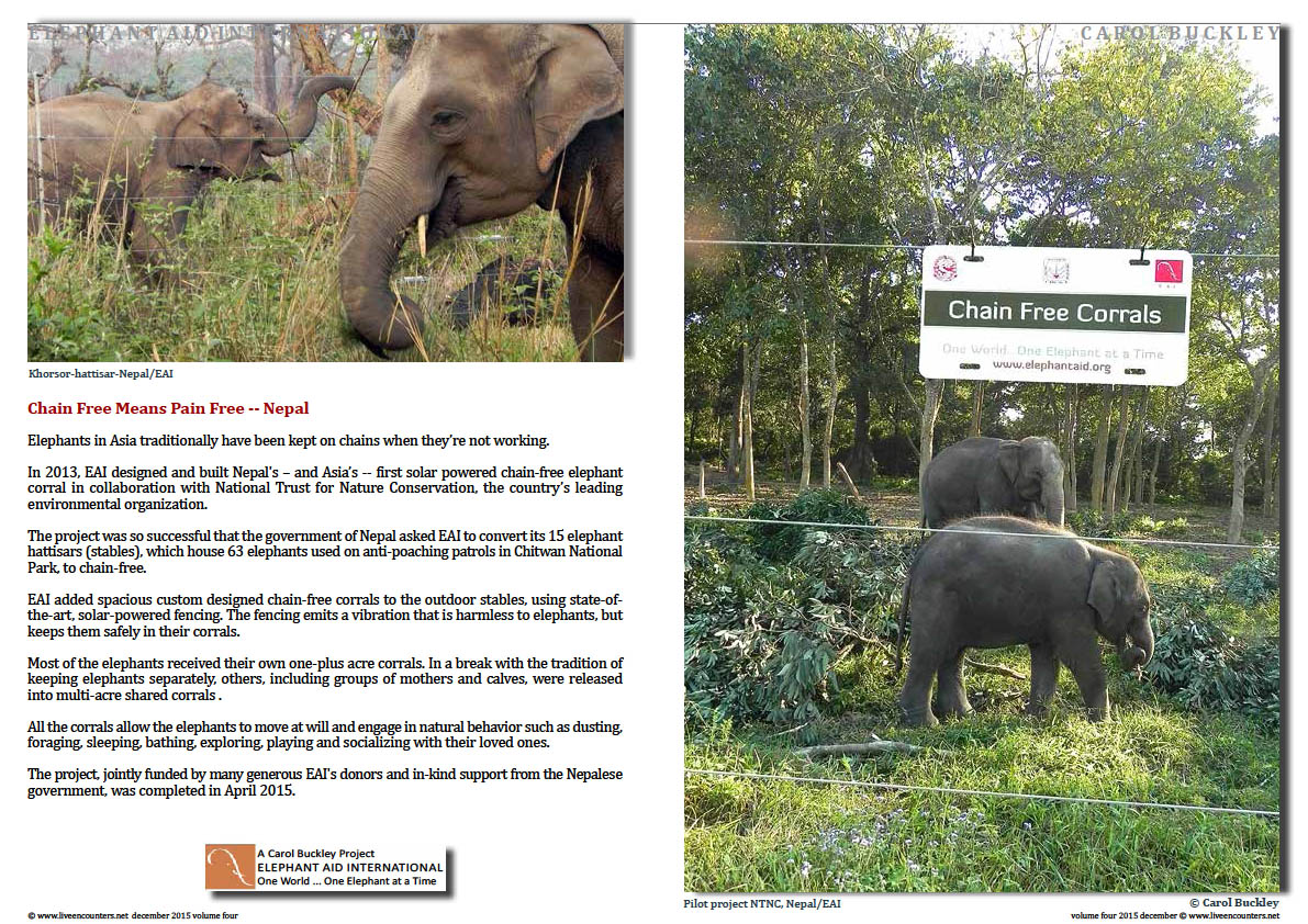 Live Encounters Magazine Carol Buckley Elephant Aid International Continues our Transformative Work in Asia Volume Four December 2015  Page 02