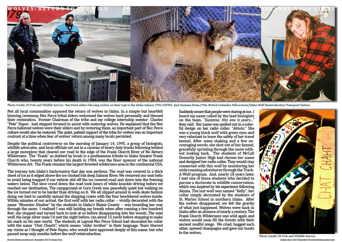 Live Encounters Suzanne Asha Stone Wolves return to the Wild Volume Four December 2015 Page 02