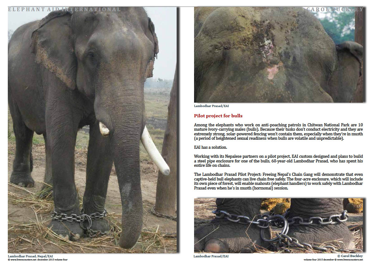 Live Encounters Magazine Carol Buckley Elephant Aid International Continues our Transformative Work in Asia Volume Four December 2015 Page 03