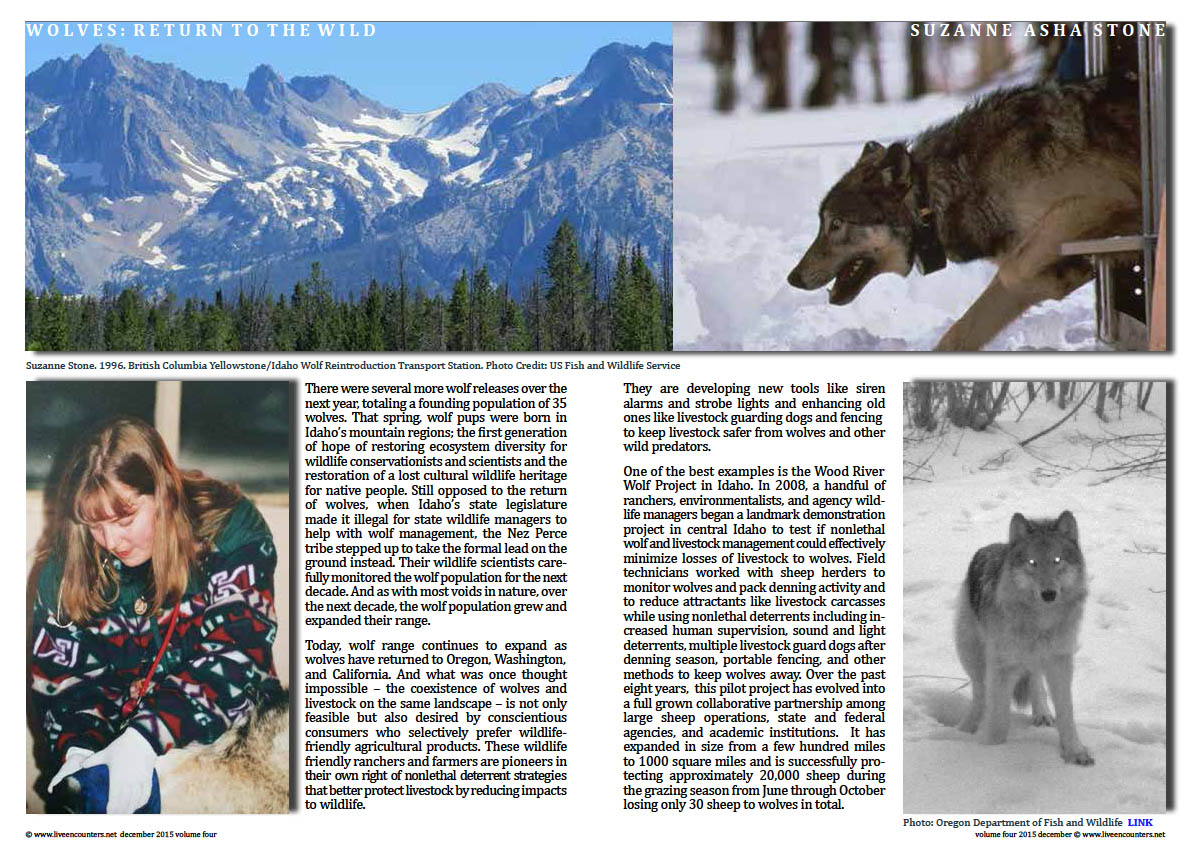 Live Encounters Suzanne Asha Stone Wolves return to the Wild Volume Four December 2015 Page 03