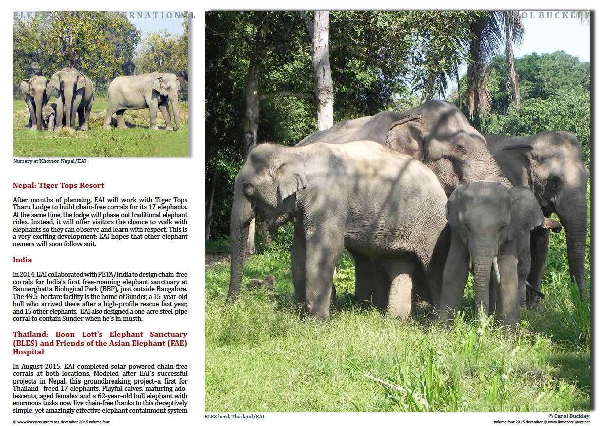 Live Encounters Magazine Carol Buckley Elephant Aid International Continues our Transformative Work in Asia Volume Four December 2015  Page 04