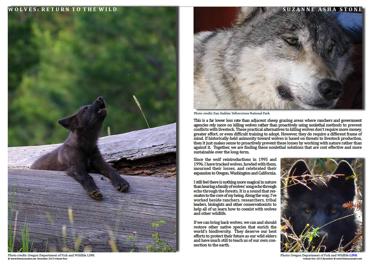 Live Encounters Suzanne Asha Stone Wolves return to the Wild Volume Four December 2015 Page 04