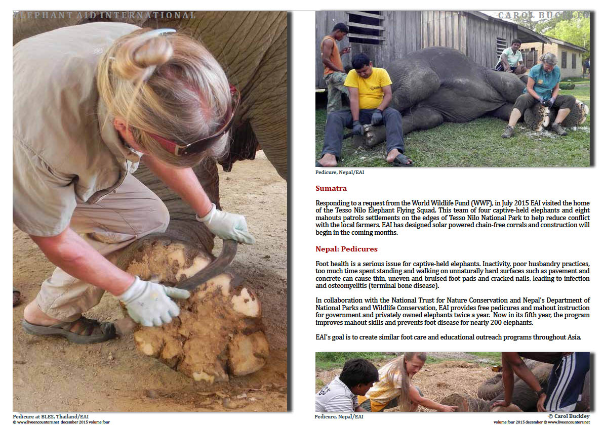 Live Encounters Magazine Carol Buckley Elephant Aid International Continues our Transformative Work in Asia Volume Four December 2015  Page 05