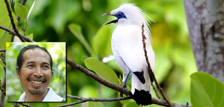 Live Encounters Magazine  Dr Bayu Wirayudha Bali Starling back from the brink Volume 4 December 2015