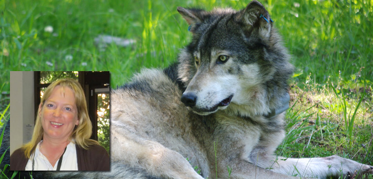 Live Encounters Suzanne Asha Stone Wolves return to the Wild Volume Four December 2015