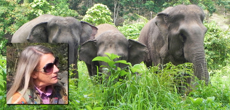 Live Encounters Magazine Carol Buckley Elephant Aid International Continues our Transformative Work in Asia! Volume Four December 2015