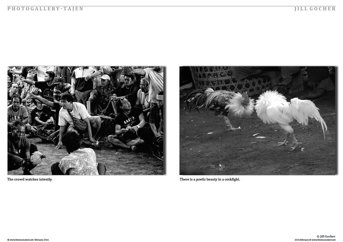 Page three Tajen - The Clandestine Cockfight - Bali's other sport, Photo feature by Jill Gocher Live Encounters Magazine February 2016