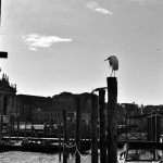 Heron perched on a briccole, mooring pole for boats in Venezia.© Mikyoung Cha