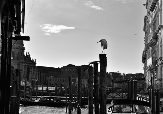 Heron perched on a briccole, mooring pole for boats in Venezia. © Mikyoung Cha
