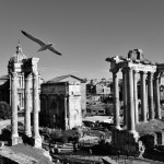 Roman Forum in Rome photobombed by a gull.© Mikyoung Cha