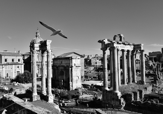 Roman Forum in Rome photobombed by a gull. © Mikyoung Cha
