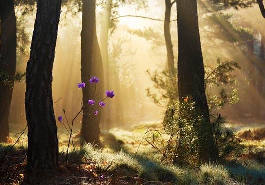 Pine Grove, Samreung © Mikyoung Cha