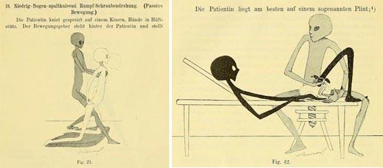 (Brandt, 1895)