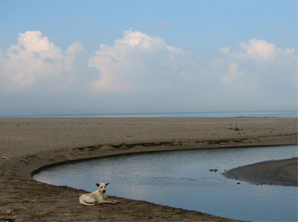 Dog at Batu Belig beach photograph by © Mark Ulyseas