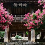03 Crepe myrtle in full bloom, Byeongsan Seawon in Andong. South Korea. © Mikyoung Cha