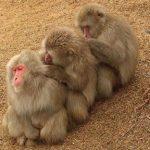 Monkeys social grooming