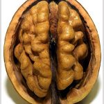 Two votes on brain