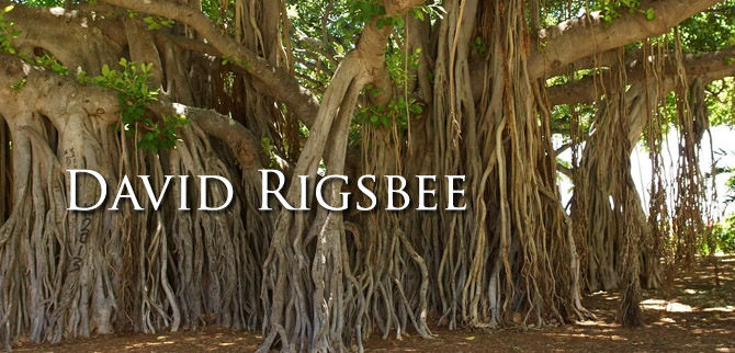 David Rigsbee profile LE P&W Feb 2020