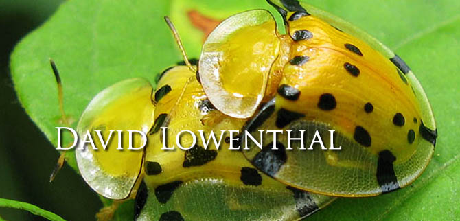 Profile David Lowenthal LE Feb