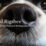 Davidrigsbee profile