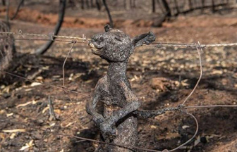 A tiny kangaroo, scorched by the blaze that tore through Cudlee Creek. Credit: Brad Fleet/The Advertiser