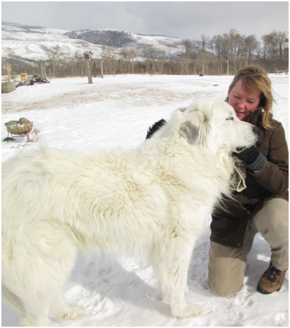 Suzanne and Luke, a livestock guardian dog working to protect livestock in wolf and grizzly country. Credit H. Stone
