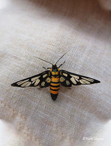 Bee, photograph by Mark Ulyseas